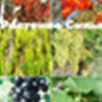 Растения Силы Надпись