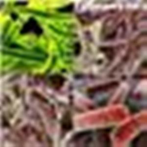 Туберкулез Прививка текс