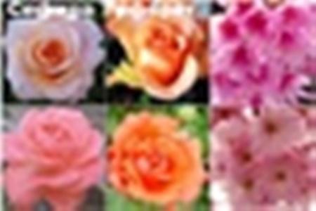 CREATOR: gd-jpeg v1.0 (using IJG JPEG v80), quality = 90
